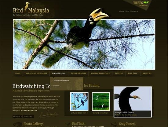 Bird Malaysia - screen shot.