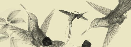 Vintage Birds - preview.