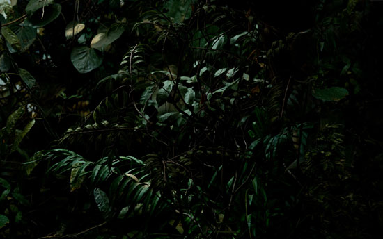 Fake Jungle