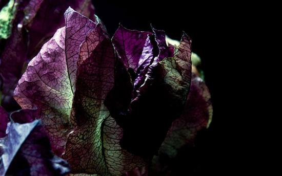 Purple Veins