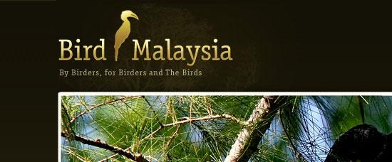 Bird Malaysia