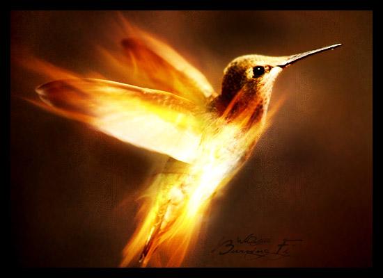 Burning Fly