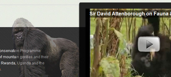 International Gorilla Conservation Programme