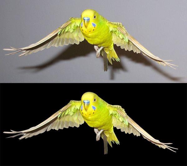 Isolating the Bird