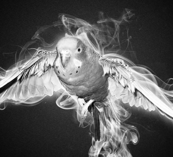 Bring the Bird Back