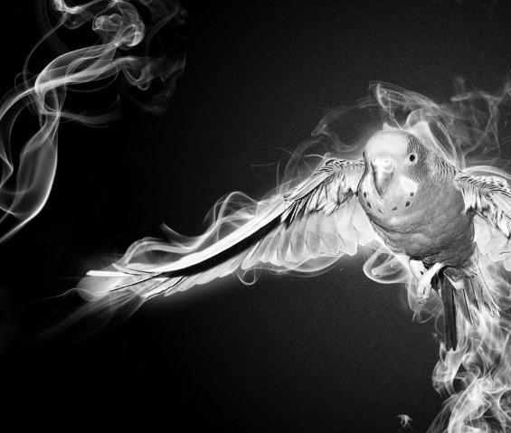 Adding Dynamic Foreground Smoke