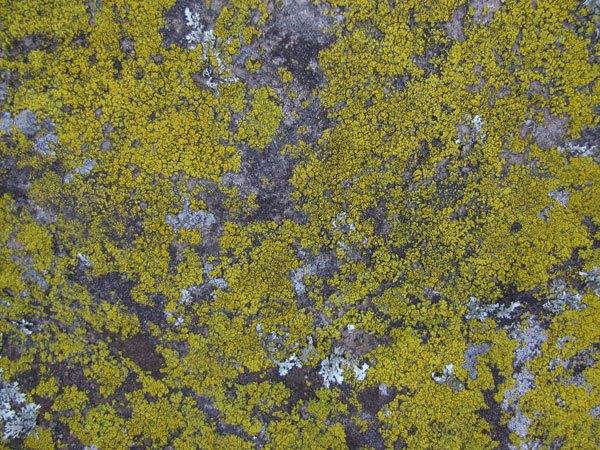Grunge Stone Texture 02