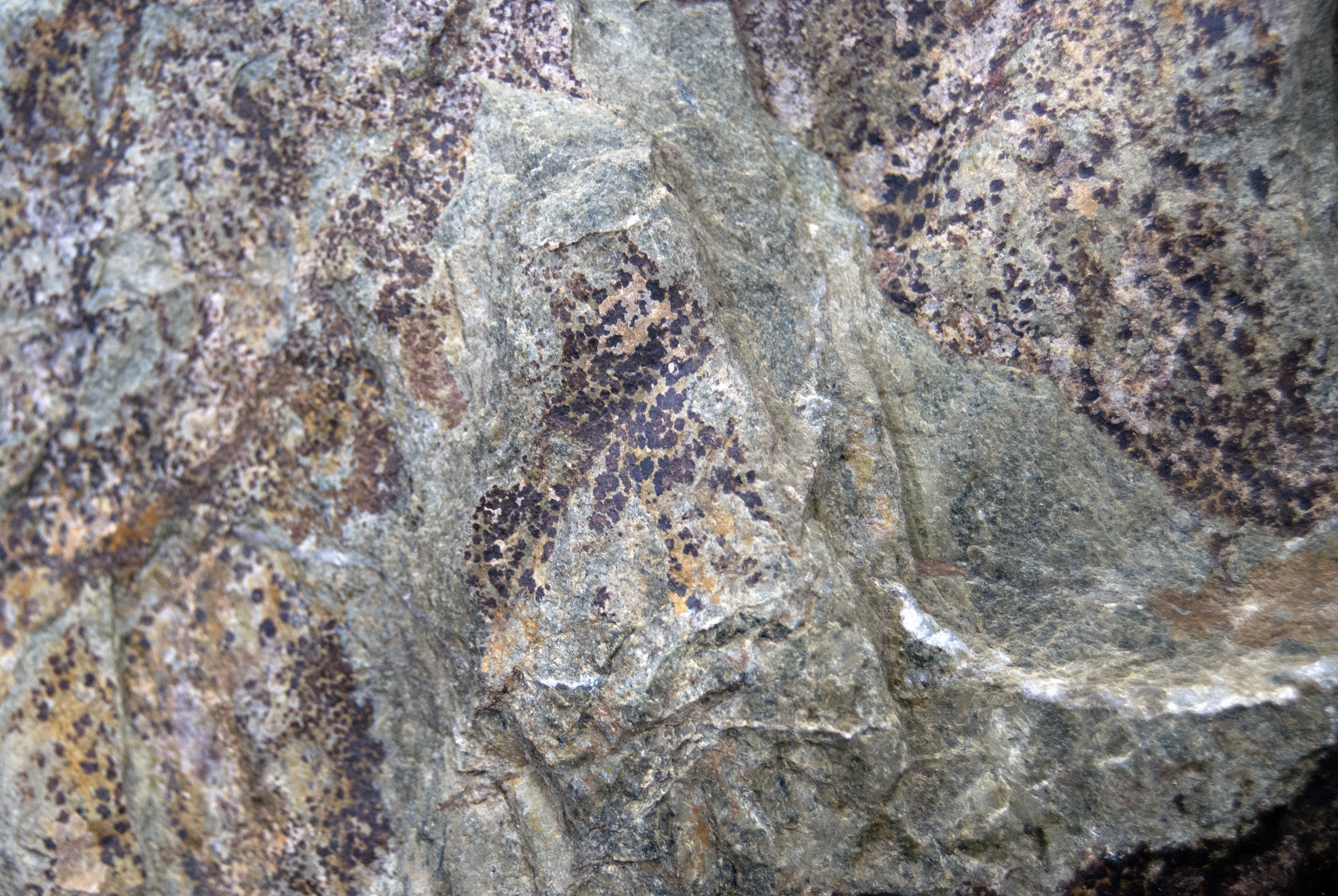 Assorted Rock Surface Texture Pack