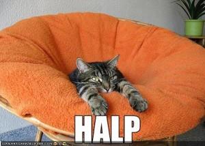 Help Your Clients Lolz Cat