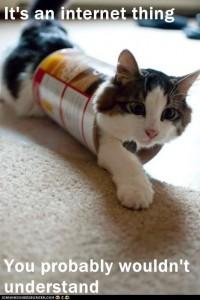 Internet Jargon Lolz Cat