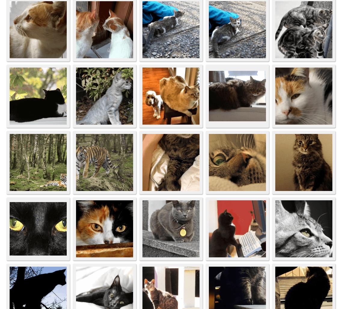 morguefile-cats