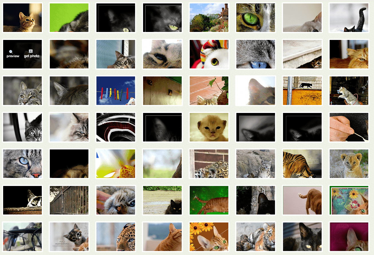 photopin-cats