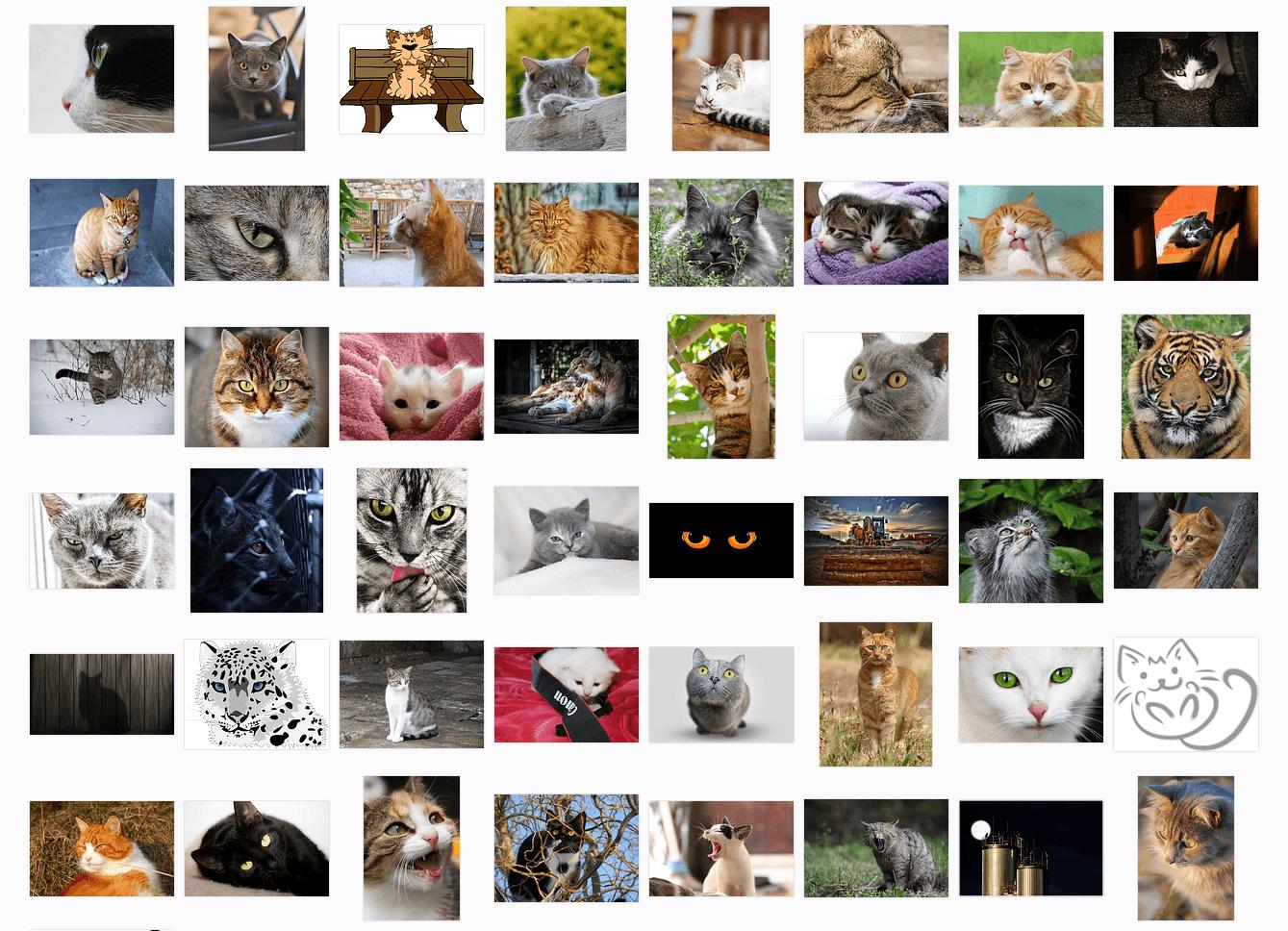 pixabay-cats