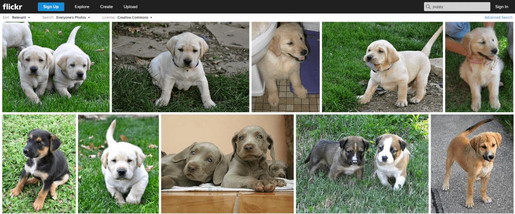 CC_puppies