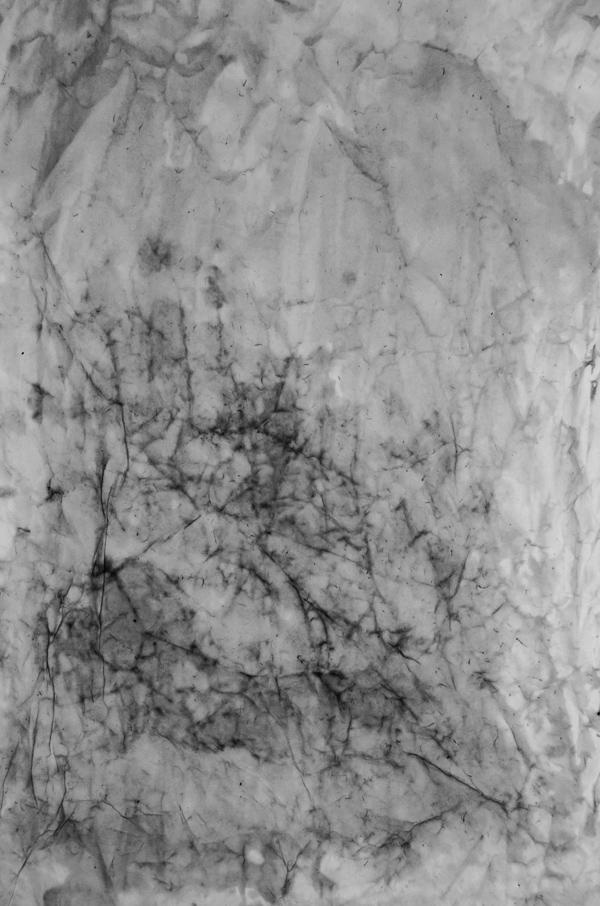 wrinkled_texture-001_600