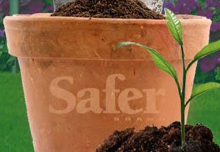 safer-brand-front